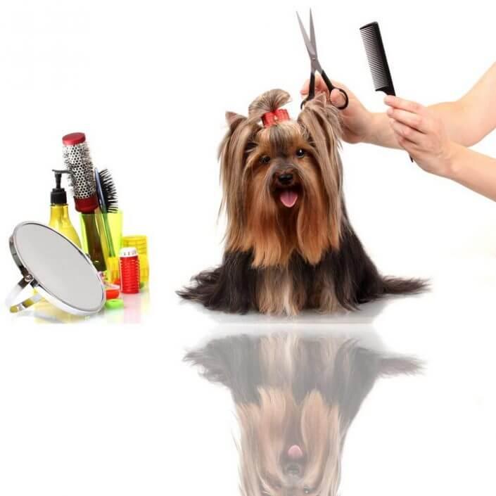 Grooming, lemmiklooma hooldus - karvapulstide pügamine, küünte lõikus ning kõrvade puhastamine.