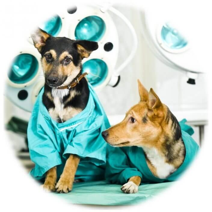 Kirurgilised operatsioonid - kastreerimine, steriliseerimine, mädaemaka eemaldamist, songa eemaldamine, soole resektsioon ja võõrkehade eemaldamine, kasvajate eemaldamine, nahaplastika, mao sondeerimine, hambakivi eemaldamine, hamba eemaldamine